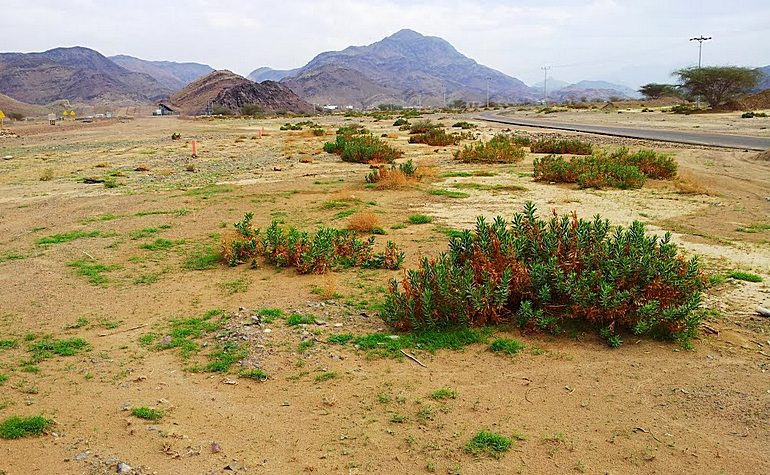 The plain of Wadi Dhafiran
